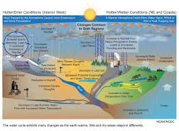 native plants of colorado native plants water cycle google search agro eco project