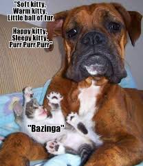 Sleepy Kitty Meme - distraught dog soft kitty warm kitty little ball of fur