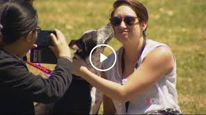 Doggy speed dating unleashed in Auckland     NEWS NOW   TVNZ