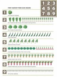 square meter to square feet 10 best square metre garden images on pinterest vegetables