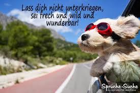sprüche aufmuntern aufmunternder spruch hund mit roter sonnenbrille sprüche suche