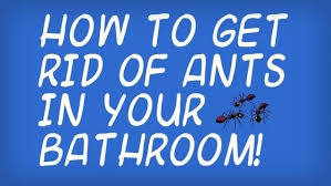 How To Get Rid Of Bugs In Kitchen Cabinets How To Get Rid Of Little Black Ants In Your Bathroom