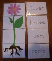 spring plant and gardening kindergarten lesson plan u2026 pinteres u2026