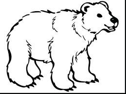 curious polar bear mother cub coloring pictures print