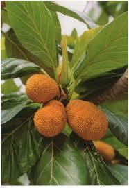 taroko national park bread tree taipei taiwan republic of