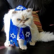 cat menorah cat of america cats