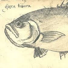best 25 drawings of fish ideas on pinterest fish graphic