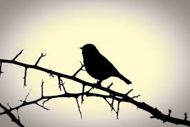 silhouette of a bird on a branch free stock photo public domain