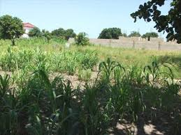 layout land land for sale in brusubi layout gambia 25m by 20m