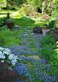 About Rock Garden by 13 Amazing Stepable Plants Evergreen Gardens And Garden Ideas