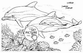 realistic dolphins coloring page for kids animal coloring pages