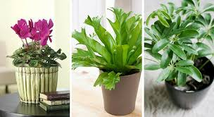 plantes d駱olluantes chambre plantes pour la chambre plantes dépolluantes