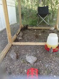 raising quail backyard chickens