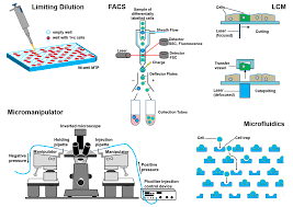 ijms free full text technologies for single cell isolation html