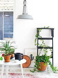 fun with indoor plants