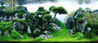 Planted Aquarium Aquascaping Cool Aquascape Aquarium Modest Decoration 1000 Ideas About