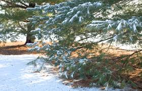 late freeze alert how it can affect your trees