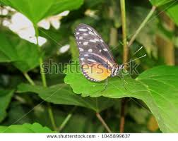 butterfly landing stock images royalty free images vectors