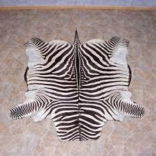 authentic zebra rug for sale creative rugs decoration