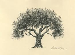 a of an olive tree with written in the roots