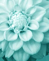 turquoise flowers a blue aqua light blue and turquoise