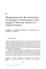Resume It Skills Mechanisms For The Formation Of Synaptic Connections In The