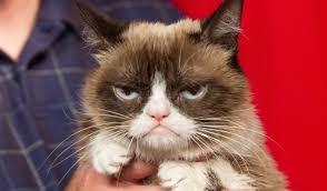 Gato Meme - el gato que triunfa en internet gana una demanda de m磧s de medio