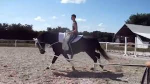 squad vaulting horse for sale sold youtube