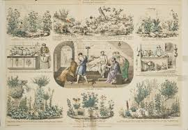 native american medicinal plants plants of mind and spirit