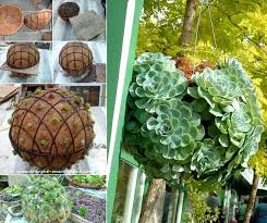 diy succulent diy hanging succulent sphere anyone can make amazing diy interior