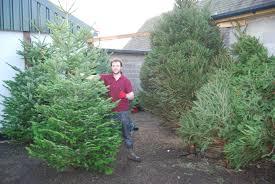 full range of christmas trees in now smith u0027s farm shop