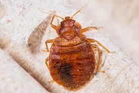 Bed Bug Exterminator Detroit Home U0026 Commercial Pest Control Troy Mi Helping Residents