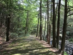 File granville state forest granville ma jpg wikimedia commons