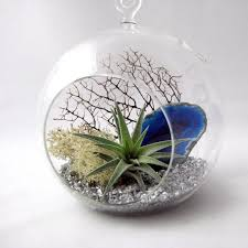 makers kit air plant inspirational air plant terrarium