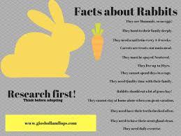 holland lop diet bunny healthy