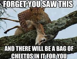 Cheetos Meme - hey free cheetos meme collection