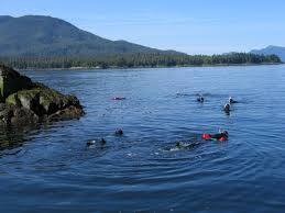 Alaska snorkeling images Ketchikan snorkel tours excursions tour ketchikan with snorkel jpg