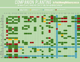 herb growing chart companion planting visual ly