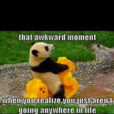 Funny Panda Memes - pregnant panda meme back ground pinterest panda meme and