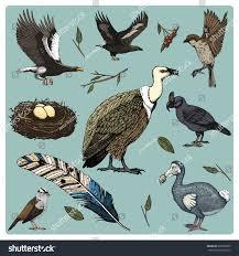 hand drawn vector realistic bird sketch stock vector 659939509
