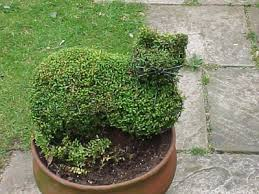 Topiary Plants Online - tips on creating an outdoor topiary
