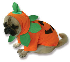 in costumes pumpkin pooch dog costume buycostumes