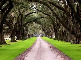 plantation homes in south carolina tomotley plantation avenue of
