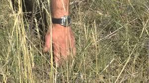 transplanting native plants replanting native prairie grasses season three youtube