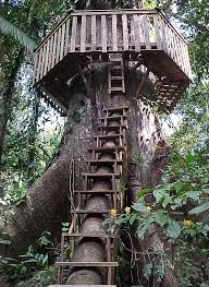 file tree house jpg file treehouse access and roundwalk jpg wikimedia commons