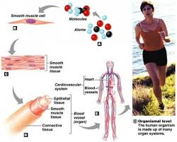 Anatomy And Physiology Introduction To The Human Body Introduction To Human Anatomy And Physiology Yaaka Digital