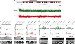 Dna Mapping High Resolution Mapping Of Dna Hypermethylation And