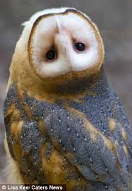 Barn Owl Sounds Owl Captured On Camera As It Spins Its Head 180 Degrees Daily