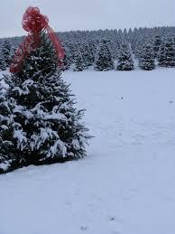 best christmas tree farms nc christmas trees 2017