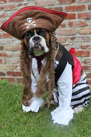 Funny Halloween Costumes Dogs 25 Dog Pirate Costume Ideas Yoda Dog Costume